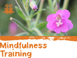 mini-mindfulness-training