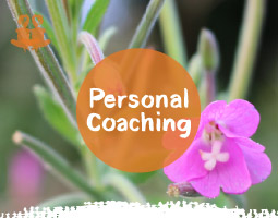 Personal Mindfulness Coaching