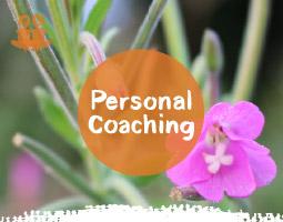 Personal Mindfulness Coaching